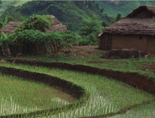 BIRD publica manual que trata do desafio de produzir alimentos para população mundial