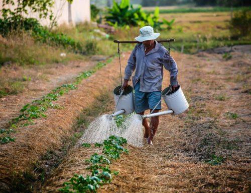 Por que devemos investir em tecnologia para a Agricultura Familiar?